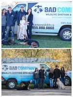 Bad Company Wildlife Eviction